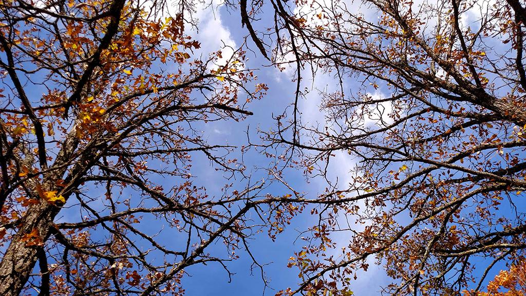 Dagwaagin or Fall time